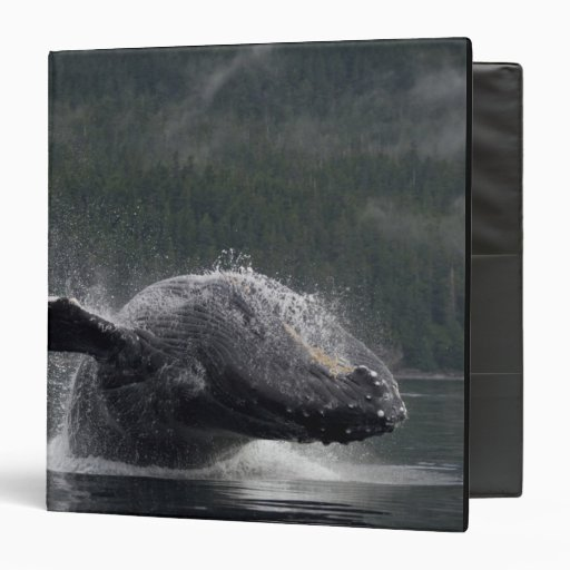 USA, Alaska, Angoon, Humpback Whale Megaptera 2 Binder