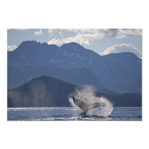USA, Alaska, Angoon, Humpback Whale Megaptera 3 Photograph