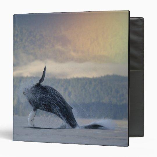 USA, Alaska, Angoon, Humpback Whale Megaptera 3 Ring Binder