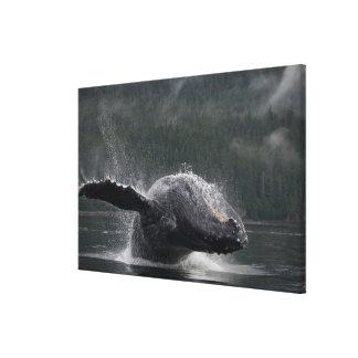 USA, Alaska, Angoon, Humpback Whale Megaptera Canvas Print