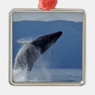 USA, Alaska, Angoon, Humpback Whale (Megaptera Square Metal Christmas Ornament