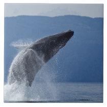 USA, Alaska, Angoon, Humpback Whale (Megaptera Tile