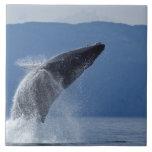 USA, Alaska, Angoon, Humpback Whale (Megaptera Ceramic Tile