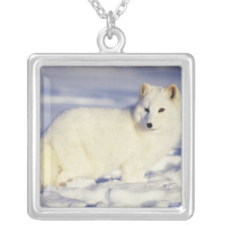 USA, Alaska. Arctic fox in winter coat. Credit Silver Plated Necklace