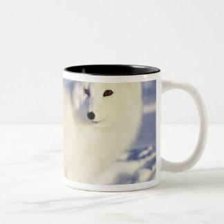 USA, Alaska. Arctic fox in winter coat. Credit Two-Tone Coffee Mug