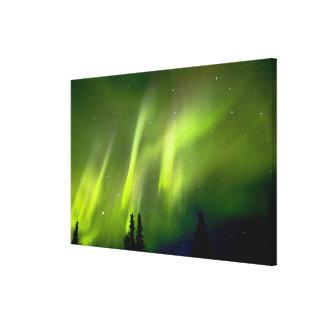 USA, Alaska, Chena Hot Springs. Aurora 3 Gallery Wrap Canvas