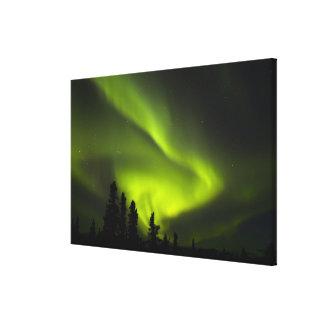 USA, Alaska, Chena Hot Springs. Aurora Borealis 2 Stretched Canvas Prints