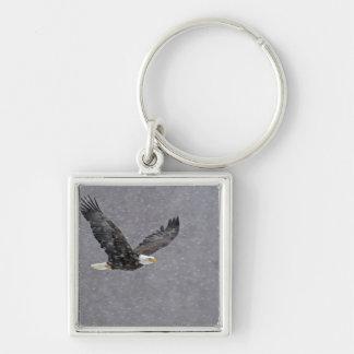 USA, Alaska, Chilkat Bald Eagle Preserve. Bald Keychain