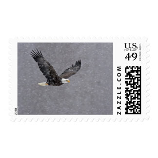 USA, Alaska, Chilkat Bald Eagle Preserve. Bald Postage