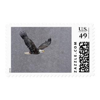 USA Alaska Chilkat Bald Eagle Preserve Bald Postage Stamps