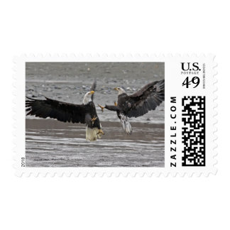 USA, Alaska, Chilkat Bald Eagle Preserve. Two Postage