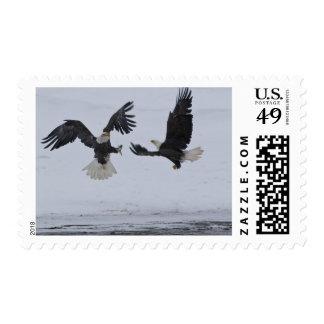 USA, Alaska, Chilkat River. Bald eagles Stamp