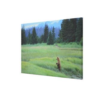 USA, Alaska, Clark Lake National Park. Grizzly Canvas Print