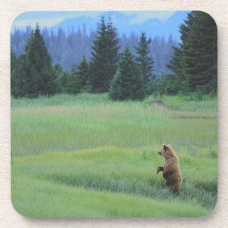 USA, Alaska, Clark Lake National Park. Grizzly Coaster