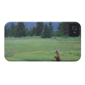 USA, Alaska, Clark Lake National Park. Grizzly iPhone 4 Case