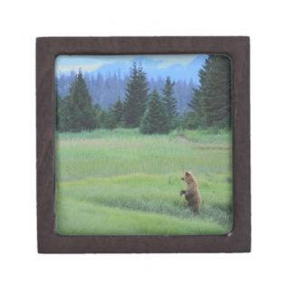 USA, Alaska, Clark Lake National Park. Grizzly Keepsake Box