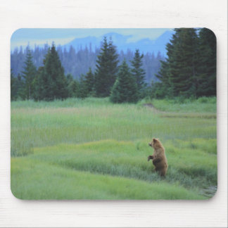 USA, Alaska, Clark Lake National Park. Grizzly Mouse Pad