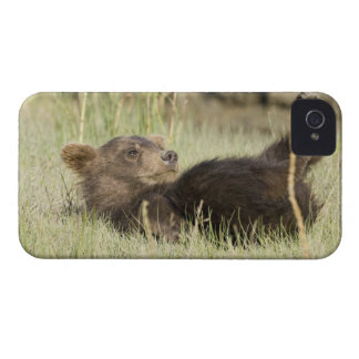 USA. Alaska. Coastal Brown Bear cub at Silver 2 iPhone 4 Case-Mate Case