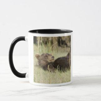 USA. Alaska. Coastal Brown Bear cub at Silver 2 Mug