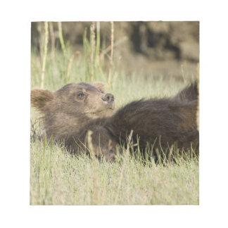 USA. Alaska. Coastal Brown Bear cub at Silver 2 Note Pad