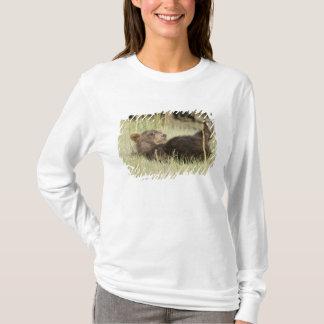 USA. Alaska. Coastal Brown Bear cub at Silver 2 T-Shirt