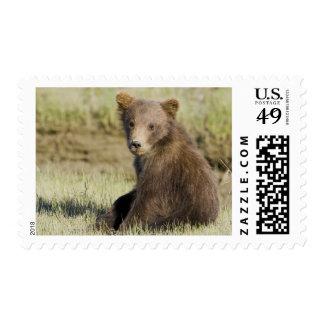 USA. Alaska. Coastal Brown Bear cub at Silver 3 Postage