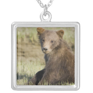 USA. Alaska. Coastal Brown Bear cub at Silver 3 Silver Plated Necklace