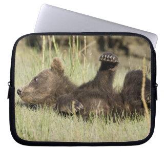 USA. Alaska. Coastal Brown Bear cub at Silver Computer Sleeves