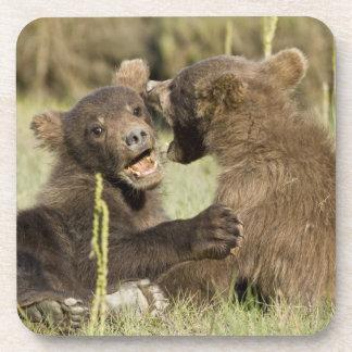 USA. Alaska. Coastal Brown Bear cubs at Silver Beverage Coaster