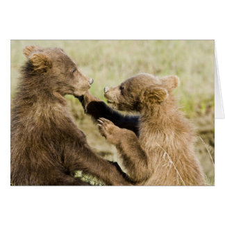 USA. Alaska. Coastal Brown Bear cubs at Silver Card