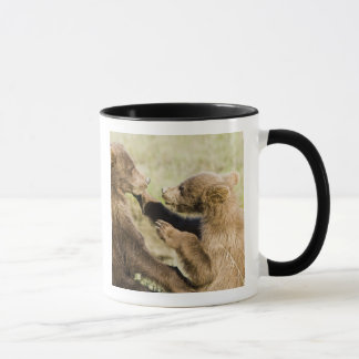 USA. Alaska. Coastal Brown Bear cubs at Silver Mug