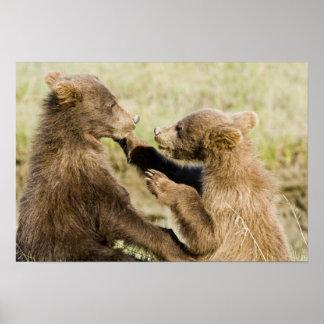USA. Alaska. Coastal Brown Bear cubs at Silver Print