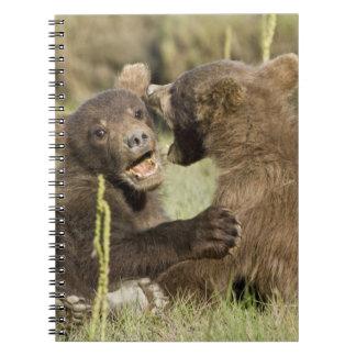 USA. Alaska. Coastal Brown Bear cubs at Silver Spiral Notebook