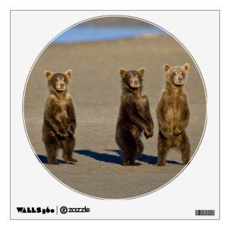 USA. Alaska. Coastal Brown Bear cubs watch their Wall Skins