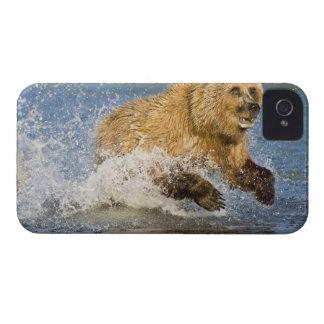 USA. Alaska. Coastal Brown Bear fishing for 2 iPhone 4 Case-Mate Case