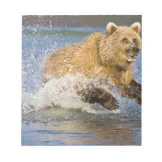 USA. Alaska. Coastal Brown Bear fishing for 2 Note Pad