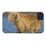 USA. Alaska. Coastal Brown Bear fishing for Case-Mate Blackberry Case