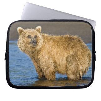 USA. Alaska. Coastal Brown Bear fishing for Laptop Computer Sleeves