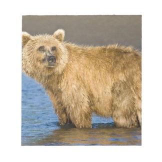 USA. Alaska. Coastal Brown Bear fishing for Notepad