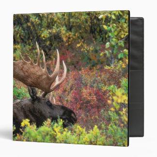 USA, Alaska, Denali National Park, Bull Moose 3 Ring Binder
