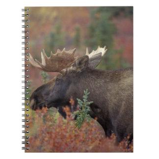USA, Alaska, Denali National Park Bull moose in Notebook