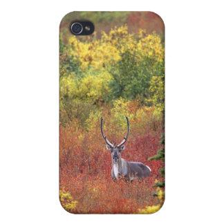 USA, Alaska, Denali National Park. Caribou and Covers For iPhone 4