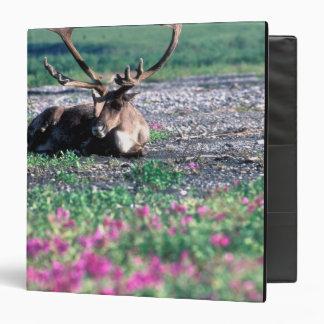 USA, Alaska, Denali National Park, Caribou Binder