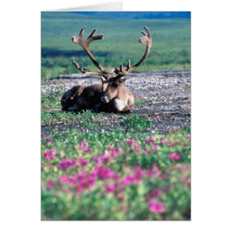 USA, Alaska, Denali National Park, Caribou Card