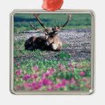 USA, Alaska, Denali National Park, Caribou Metal Ornament
