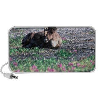 USA, Alaska, Denali National Park, Caribou iPod Speakers