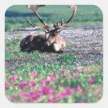 USA, Alaska, Denali National Park, Caribou Square Sticker