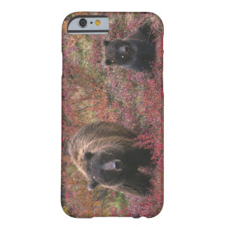 USA, Alaska, Denali National Park. Grizzly bear Barely There iPhone 6 Case