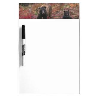 USA, Alaska, Denali National Park. Grizzly bear Dry Erase Boards