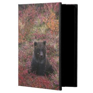 USA, Alaska, Denali National Park. Grizzly bear iPad Air Covers
